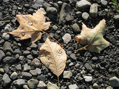 leaves in the driveway