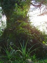 tree_tubing