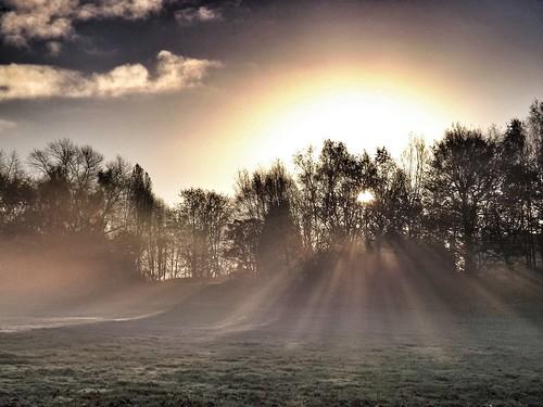 [フリー画像素材] 自然風景, 森林, 朝焼け・夕焼け, 薄明光線, 風景 - イギリス ID:201211210600