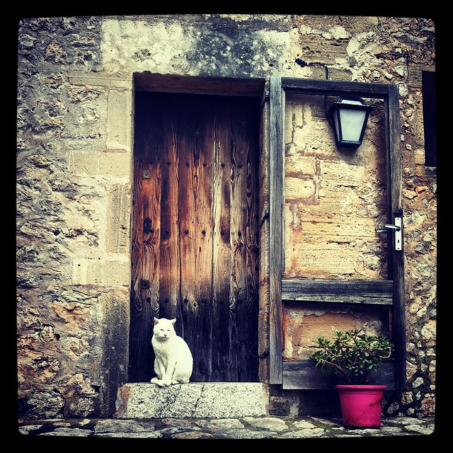 The Cat and The Door