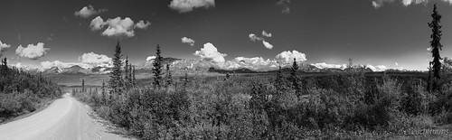 Beside the Denali Highway