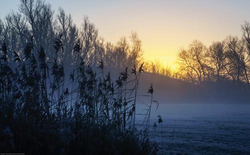blue sky mist cold tree field fog sunrise reeds skåne frost sweden ngc himmel sverige träd soluppgång blå dimma kall vass fält artdigital sallerup blinkagain
