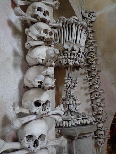 bone-cup