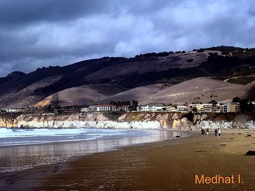 ocean rescue bird sand pacific medhathi mygearandme mygearandmepremium coastalandwaterviewsbymi