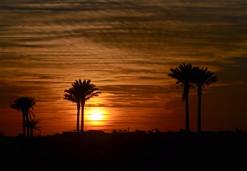 light tree nature sonora sunrise mexico palmtree puertopenasco thegalaxy rememberthatmomentlevel1 rememberthatmomentlevel2 rememberthatmomentlevel3