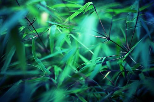 [フリー画像素材] 自然風景, 花・植物, 竹・竹林, 緑色・グリーン ID:201212200600
