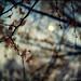 moonrising by TommyOshima