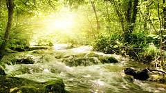 [フリー画像素材] 自然風景, 森林, 河川・湖 ID:201212072000