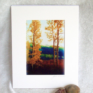 Faded Aspens matted print-005