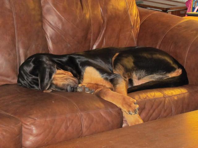 gunny sleeping
