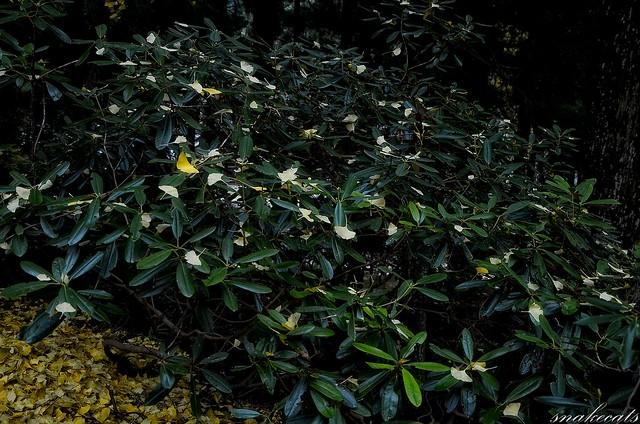 「葉」 室生寺 - 奈良