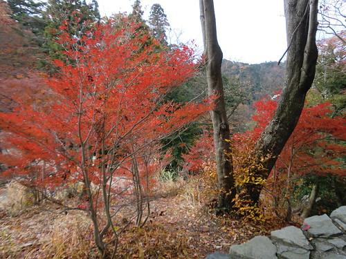 20121203高尾山045