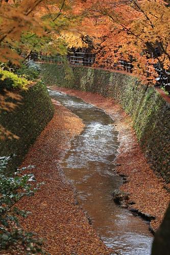 Autumn KITANO-TENMANGU 北野天満宮