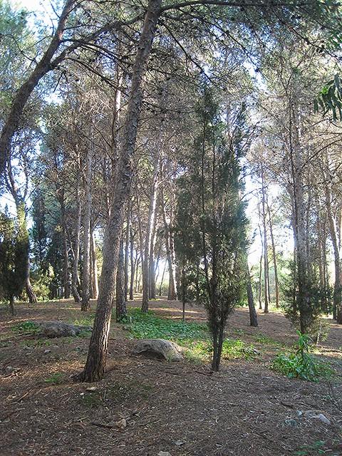 bosque III