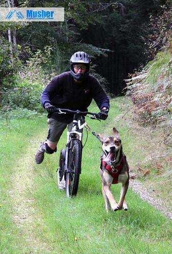 Cani trottinette 1 chien