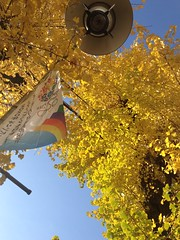 Ginkgo and Sky