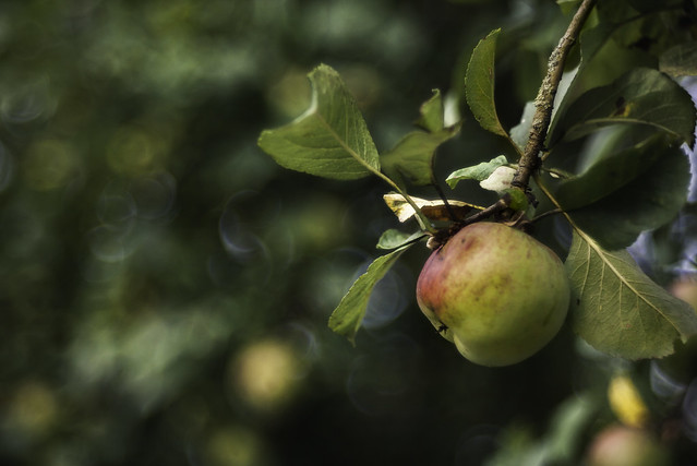 apple I mit dem Meyer Görlitz Trioplan 2.8/100 + ZR 12mm