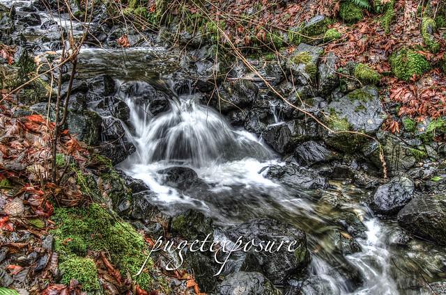 Upper Japanese Gulch Stream