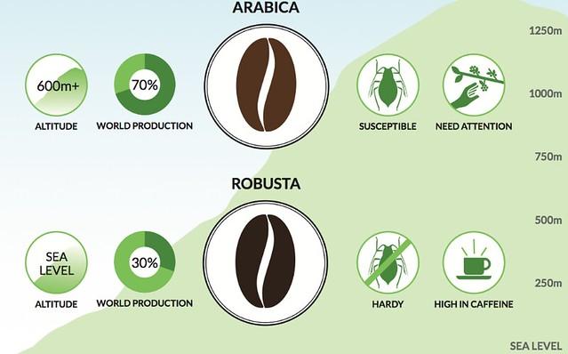 Caffeine Amount in Arabica and Robusta