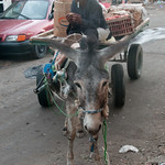 Donkey Cart at Hurghada Market - Egypt