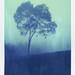 tree by Jeremy Klapprodt