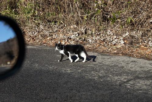 福島県 避難区域の猫