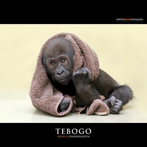 TEBOGO