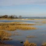 Sharps Green Bay towards Eastcourt Meadows(1)