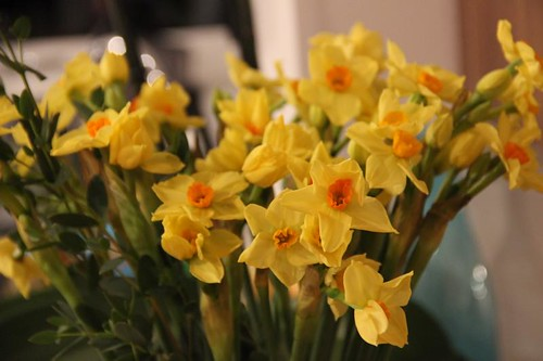 Scilly Narcissi