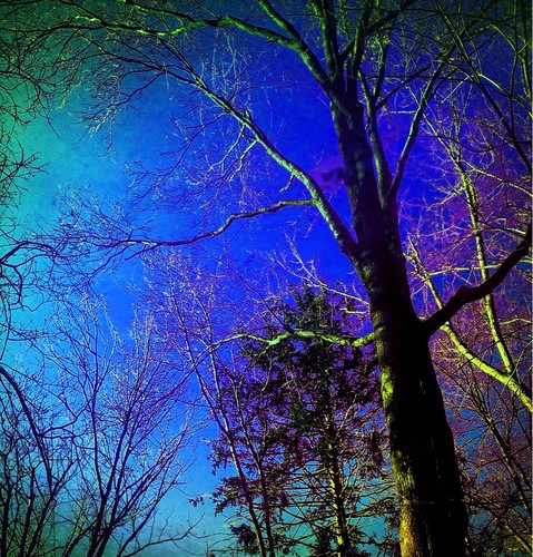 wood blue trees red sky usa green colors yellow america newjersey view nj centeno botannical