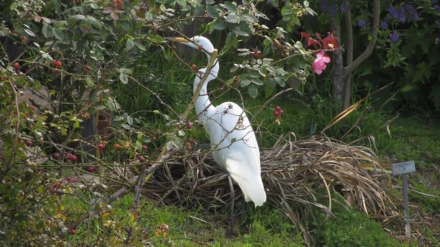 IMG_4975 great egret backyard heron