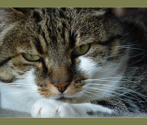 ♥ Minet the Cat ♥ by Mystycat =^..^= (mostly OFF)