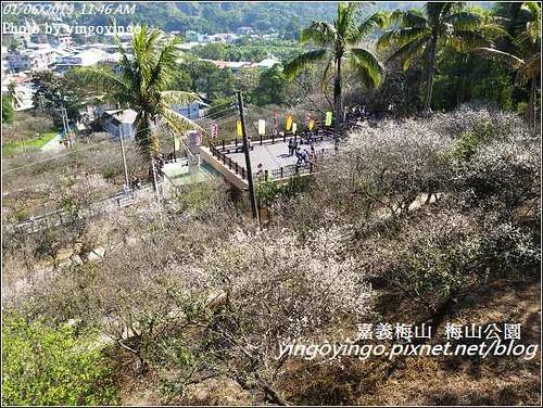 嘉義梅山_梅山公園20130106_R0071473