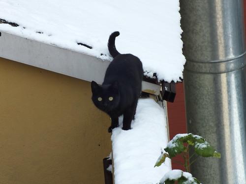 Fekete macska a fehér hóban