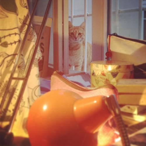 Gatto spione by la casa a pois
