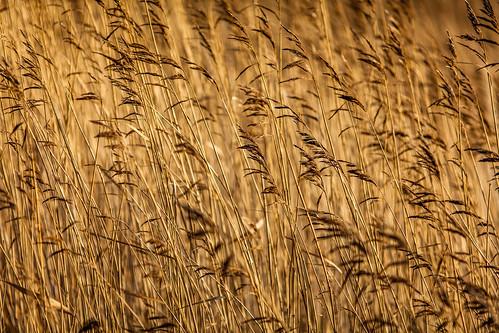 orange nature water grass photography coast photo europe sweden grain january coastal photograph 100 sverige scandinavia f28 200mm halland fav10 2013 ef200mmf28liiusm ¹⁄₁₂₅₀sec skintebo mabrycampbell january12013 201301011883