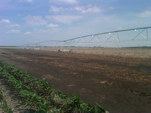 first irrigation