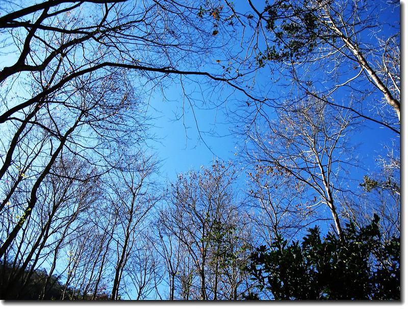布布爾溪旁楓香林