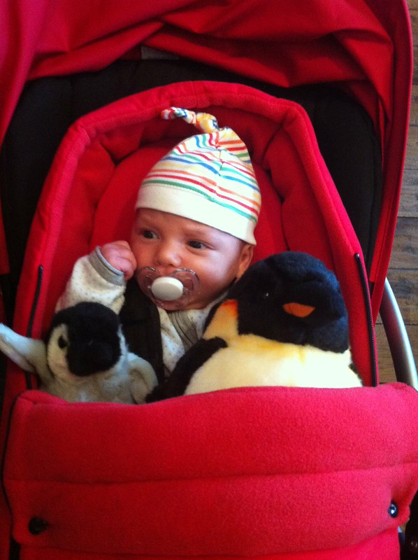 Milo and his penguins