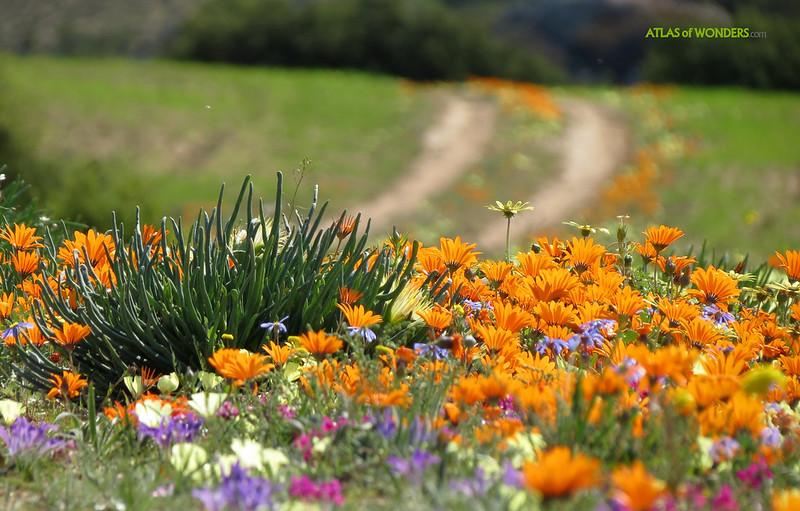 Skilpad Wildflower Reserve