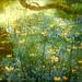 The meadow by studiodobs