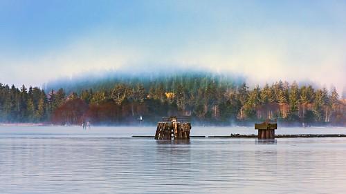 portalberni alberniinlet alberni sea scene water fog scenery scape scenicsnotjustlandscapes scenic landscape seascape nikon nikkor ngc view 70200mmf28vrii 70200mmf28gedvrii d750 britishcolumbia canada vancouverisland