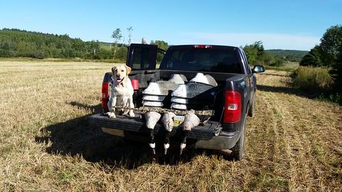 Jaxx goose hunting