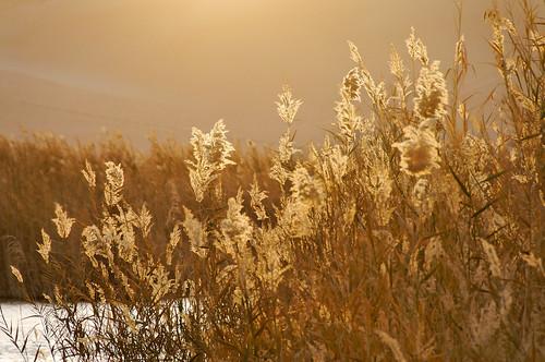 desert egypt flickr sand siwa matrouhgovernorate egitto eg
