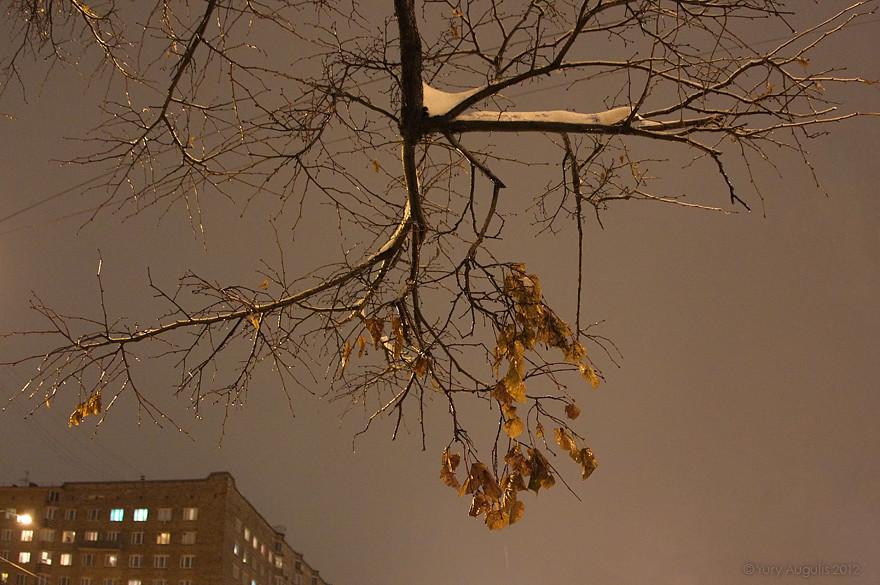 Ice rain 2012 11 30. 10