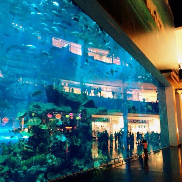 Massive Indoor Aquarium Flickr Photo Sharing