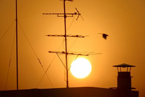 sunset shadow orange sun bird silhouette sony south gap korea fullframe southkorea 500mm generation antenna antennas daejeon generationgap 대전 차이 세대차이 세대 sonya99 500mmf8supertelephotomirrorlens
