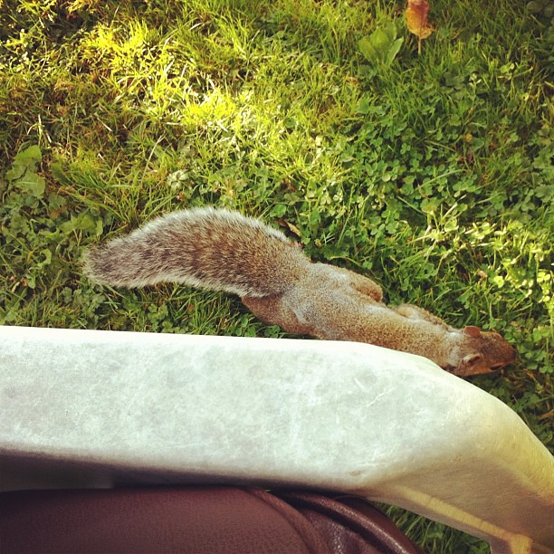 New low: being ignored by squirrels