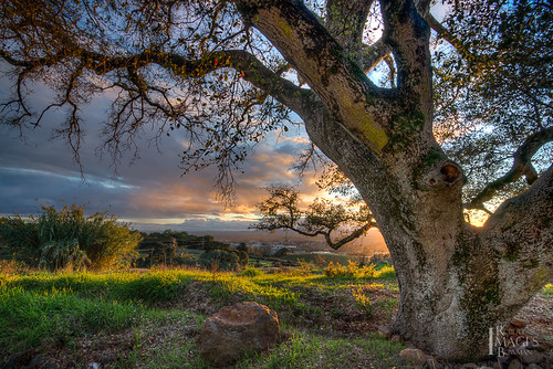 california light sunset tree grass leaves northerncalifornia clouds oak nikon rocks view branches bark sonomacounty santarosa oaktree d600 paradiseridgewinery bobbowman rmbimages robertbowmanphotography