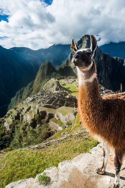 Machu Picchu - Machu Picchu on 2012-10-08 - _DSC3555.NEF